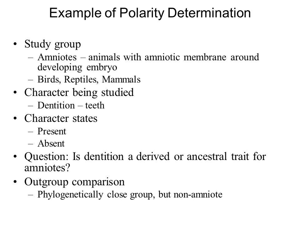Example of Polarity Determination