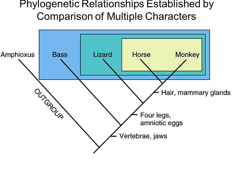 a comparison of the relationships of Beware of the graphic nature of this story explain a comparison of the monogamous and polygamous relationships how the healthy people 2020 relates to.