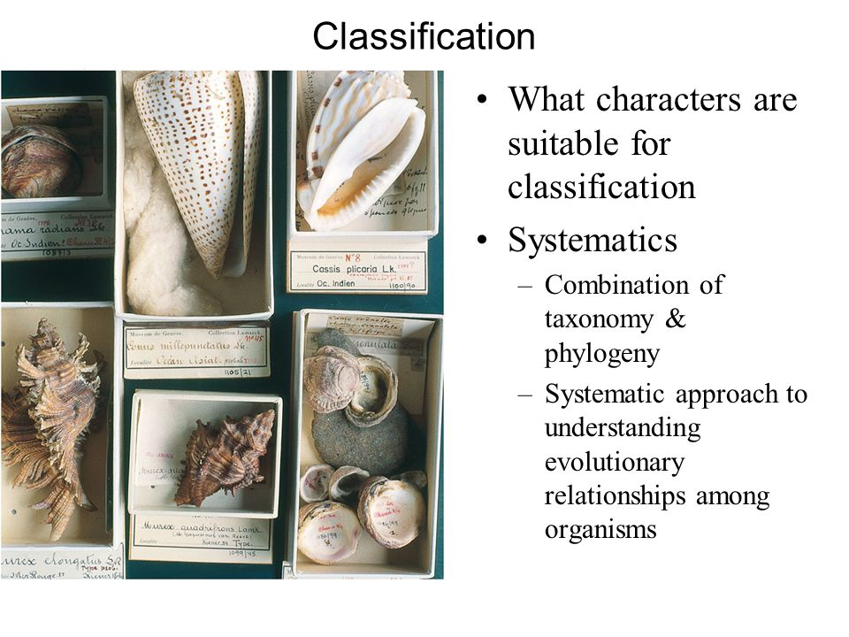 Classification What characters are suitable for classification