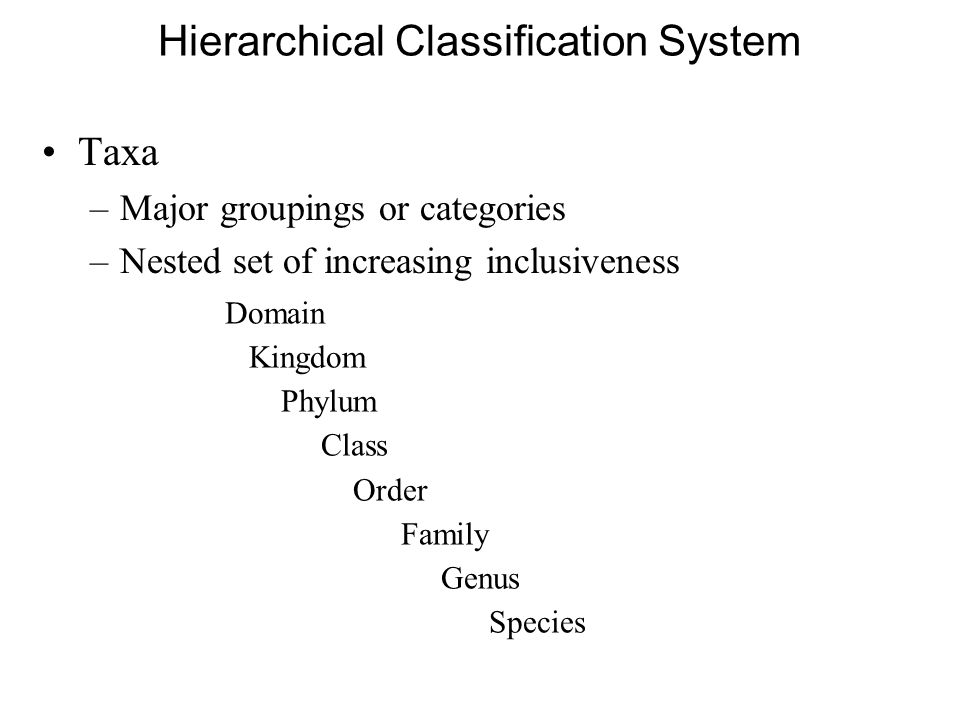 Hierarchical Classification System