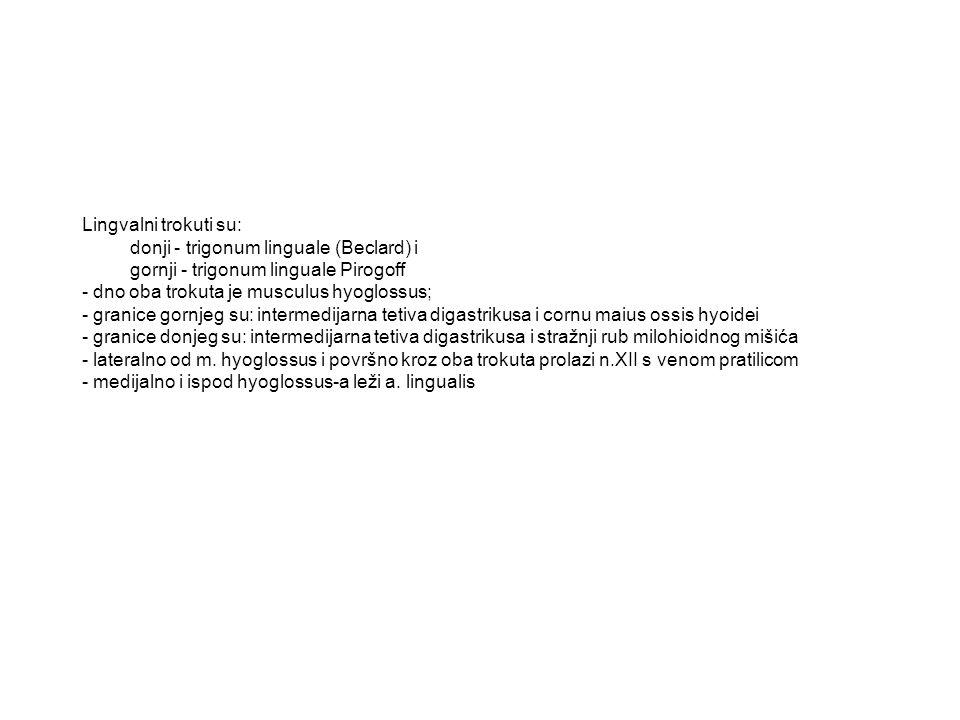 Lingvalni trokuti su: donji - trigonum linguale (Beclard) i. gornji - trigonum linguale Pirogoff. - dno oba trokuta je musculus hyoglossus;