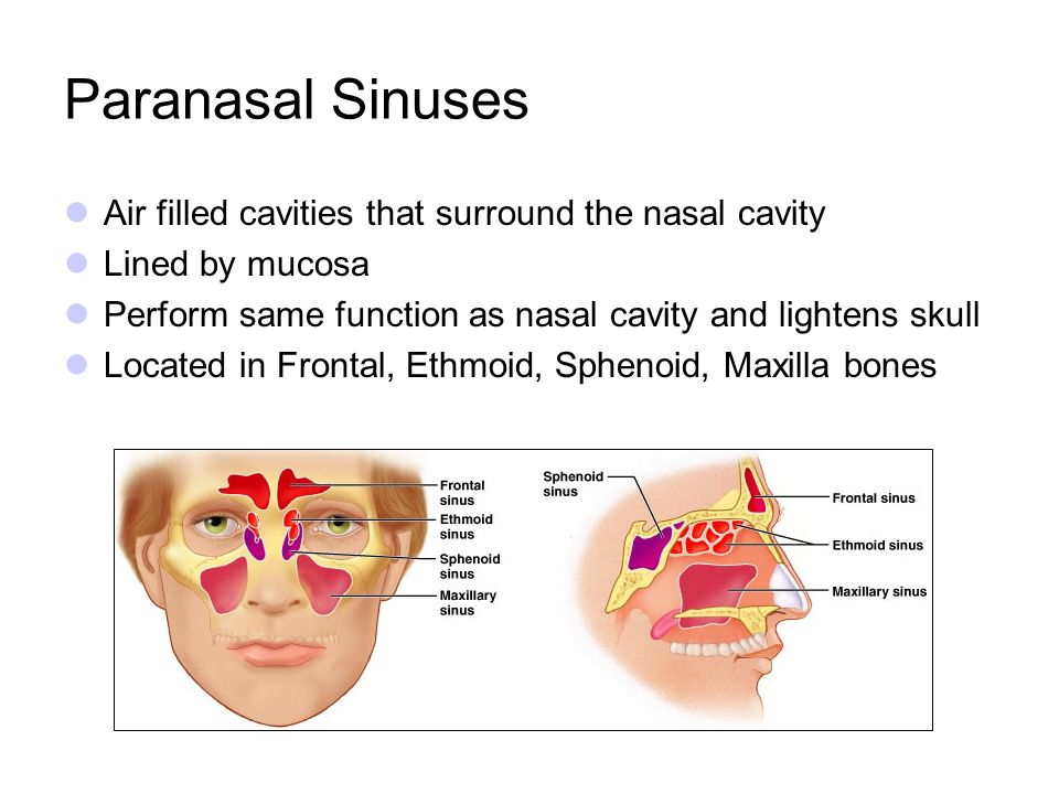 Paranasal Sinuses Air filled cavities that surround the nasal cavity