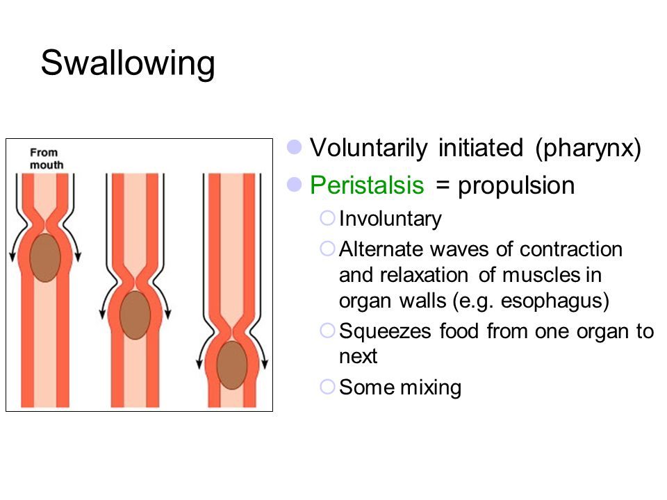 Swallowing Voluntarily initiated (pharynx) Peristalsis = propulsion