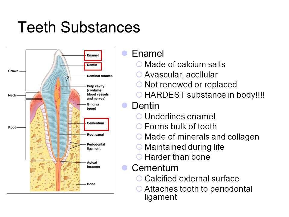 Teeth Substances Enamel Dentin Cementum Made of calcium salts