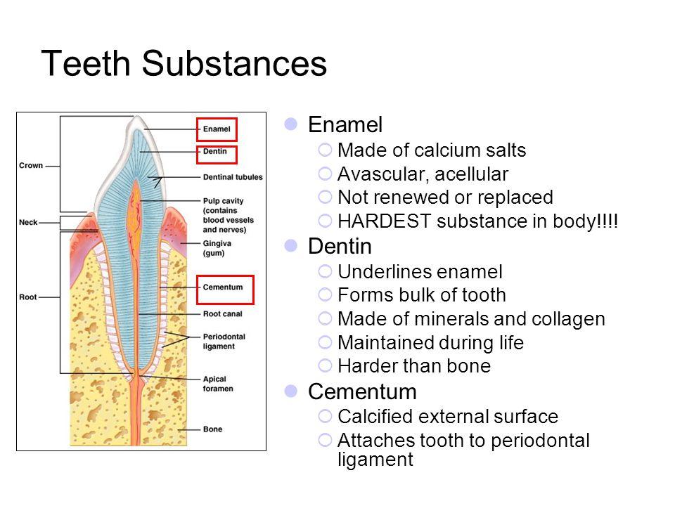 Teeth Substances Enamel Dentin Cementum Made of calcium salts