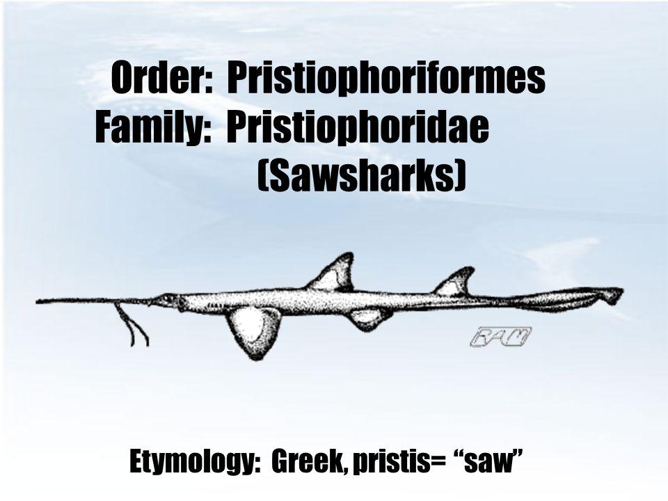 Order: Pristiophoriformes Family: Pristiophoridae (Sawsharks)