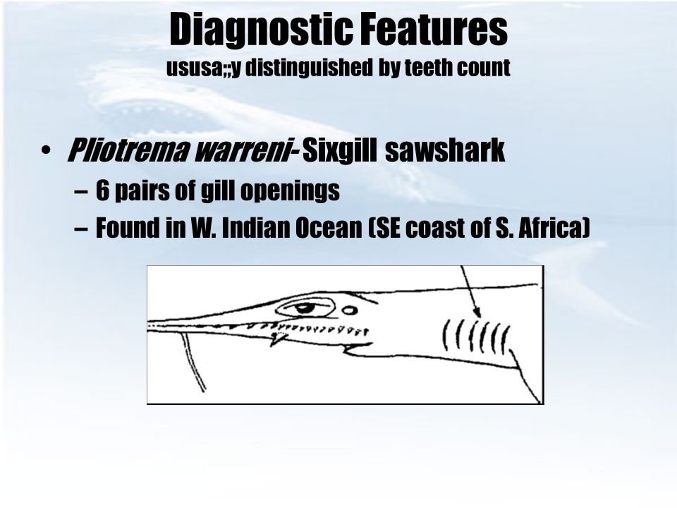 Diagnostic Features ususa;;y distinguished by teeth count