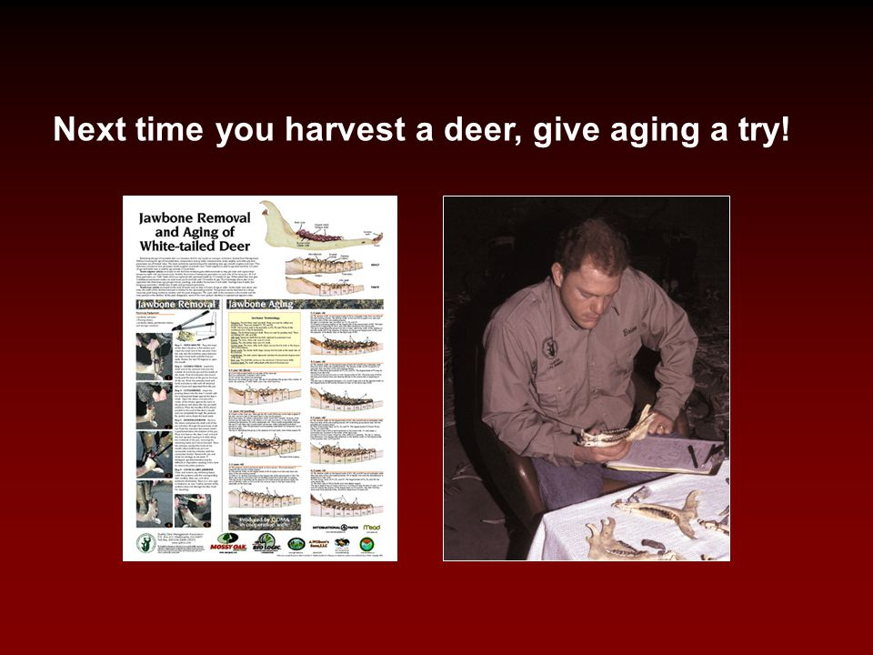 Next time you harvest a deer, give aging a try!