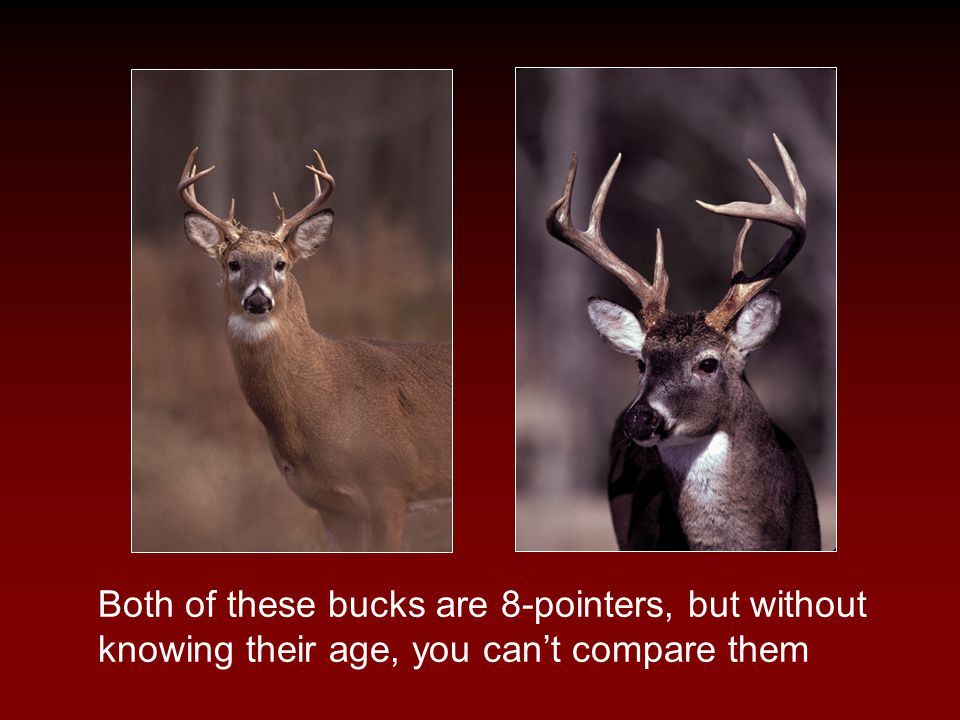 Both of these bucks are 8-pointers, but without knowing their age, you can't compare them
