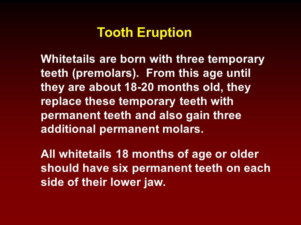 Tooth Eruption