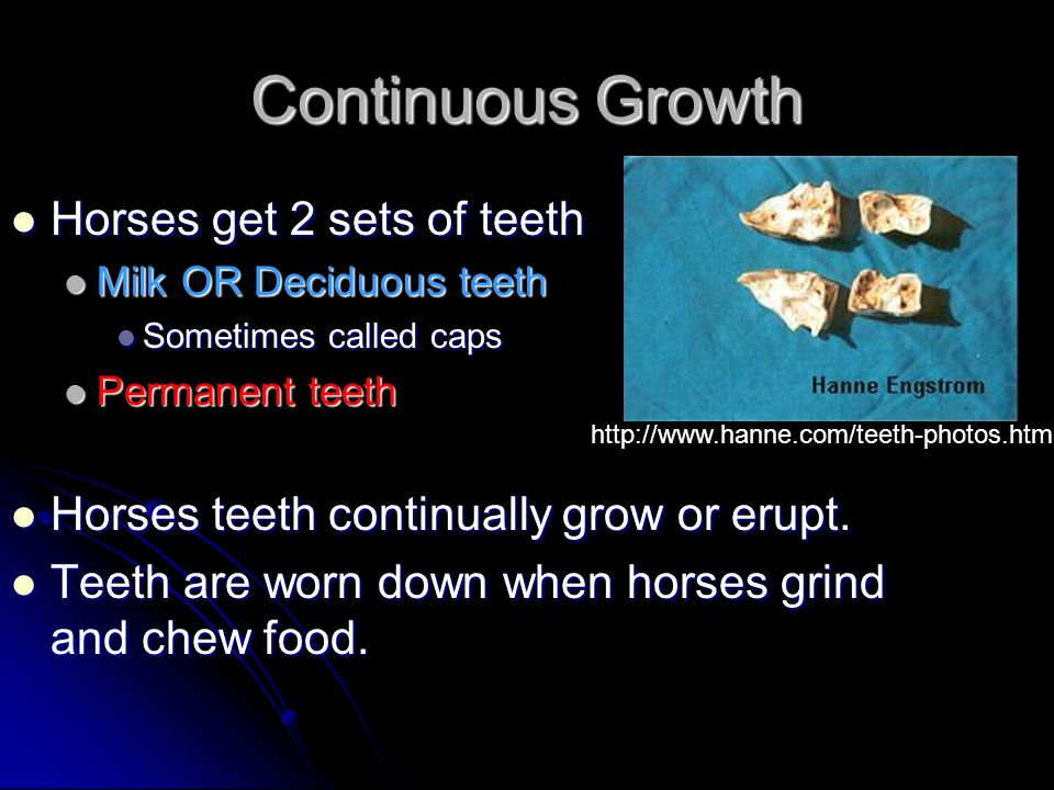 Continuous Growth Horses get 2 sets of teeth