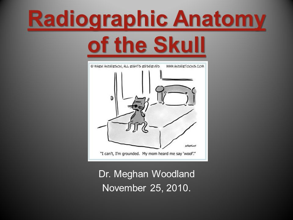 Radiographic Anatomy of the Skull