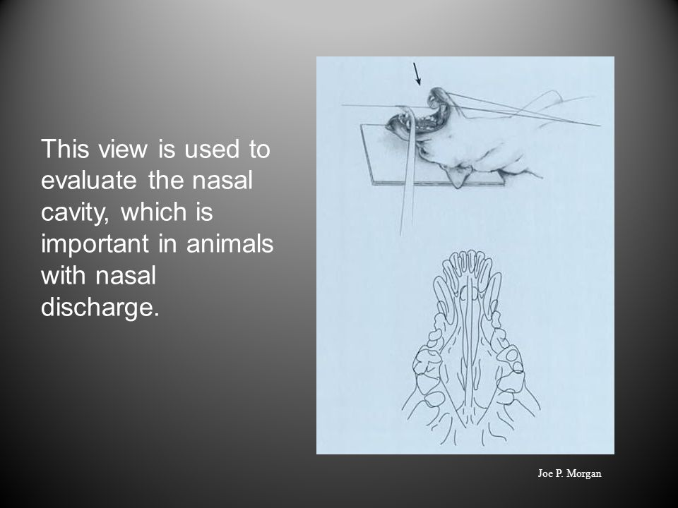 This view is used to evaluate the nasal cavity, which is important in animals with nasal discharge.