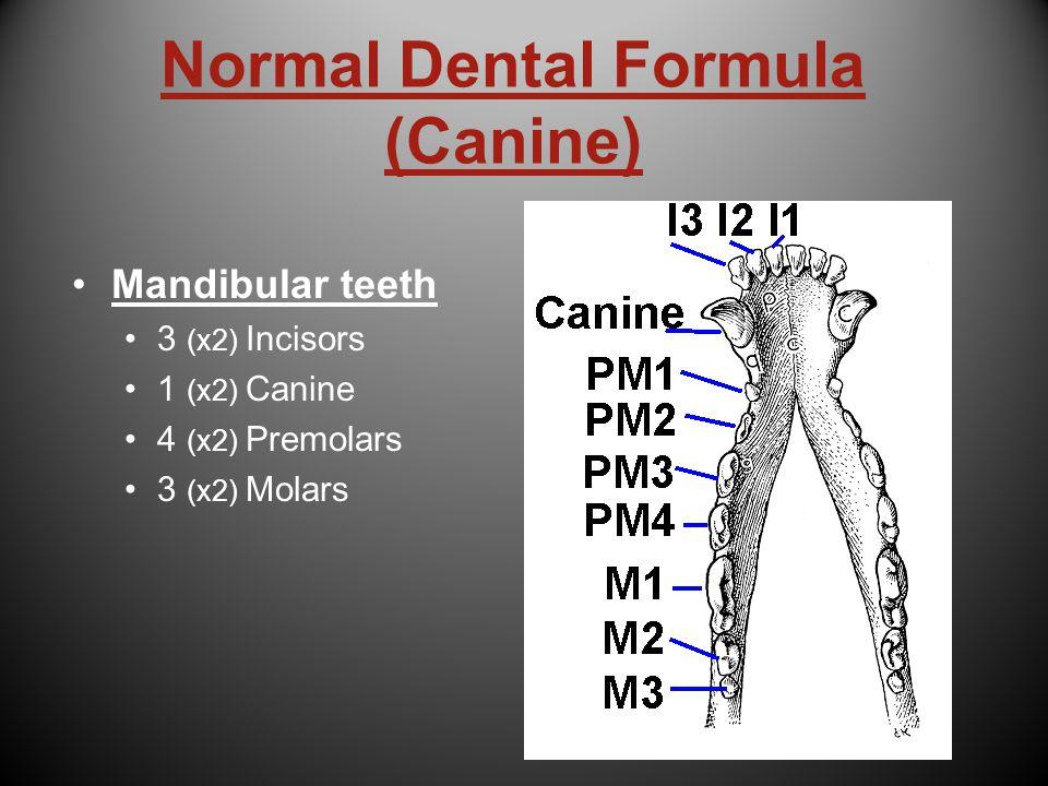 Normal Dental Formula (Canine)