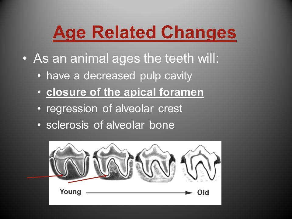 Age Related Changes As an animal ages the teeth will: