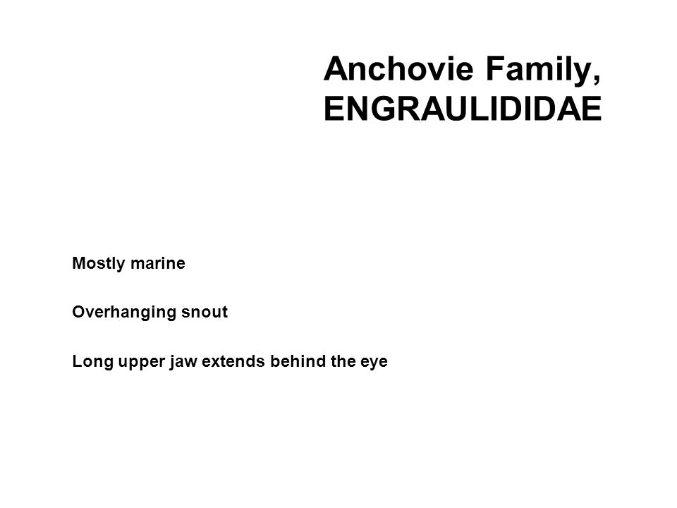 Anchovie Family, ENGRAULIDIDAE