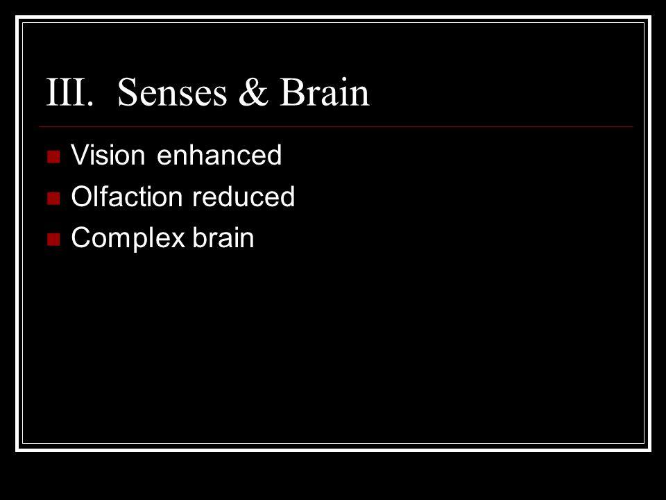 III. Senses & Brain Vision enhanced Olfaction reduced Complex brain