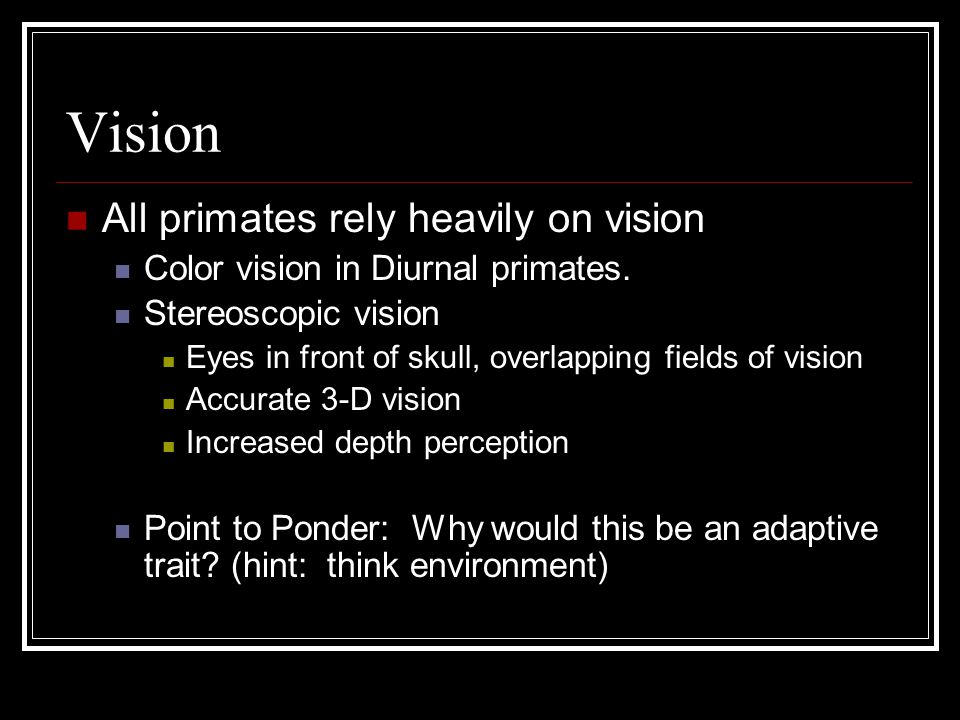 Vision All primates rely heavily on vision