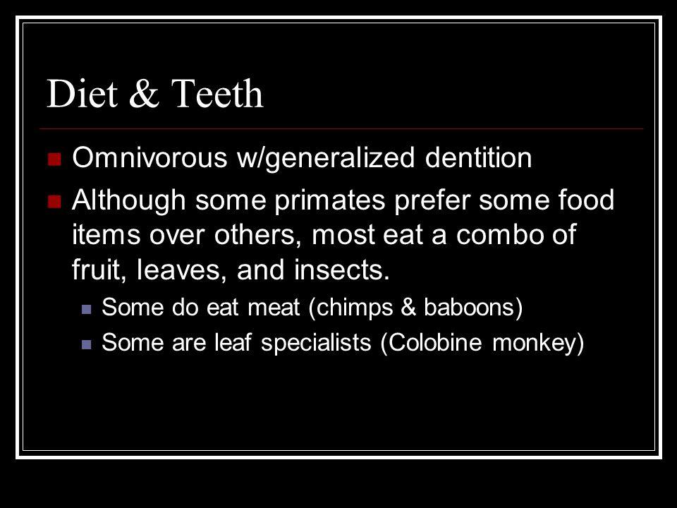 Diet & Teeth Omnivorous w/generalized dentition