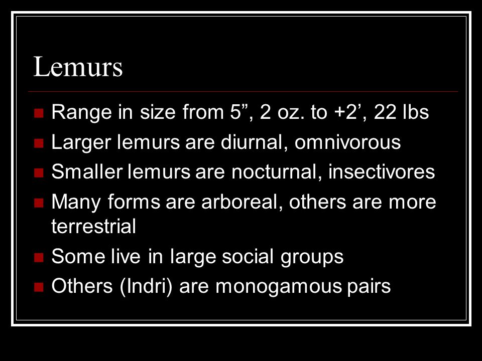 Lemurs Range in size from 5 , 2 oz. to +2', 22 lbs