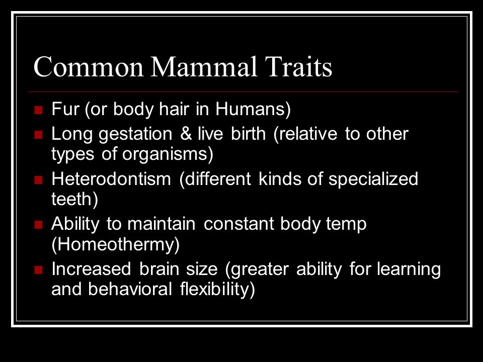 Common Mammal Traits Fur (or body hair in Humans)