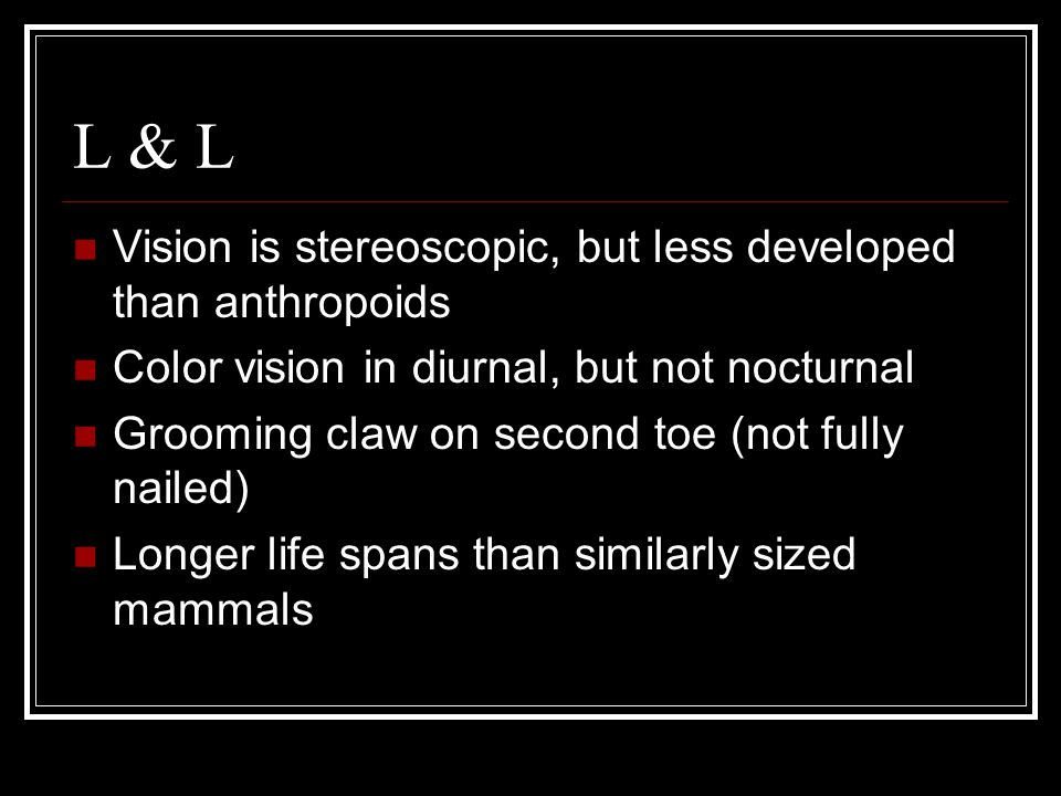 L & L Vision is stereoscopic, but less developed than anthropoids