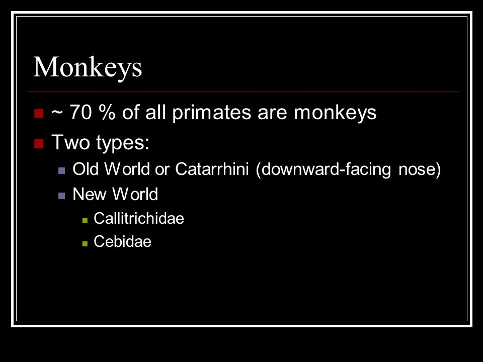 Monkeys ~ 70 % of all primates are monkeys Two types: