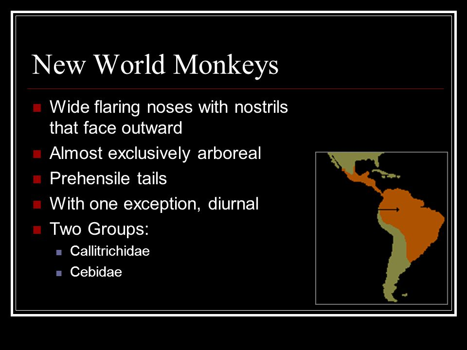 New World Monkeys Wide flaring noses with nostrils that face outward