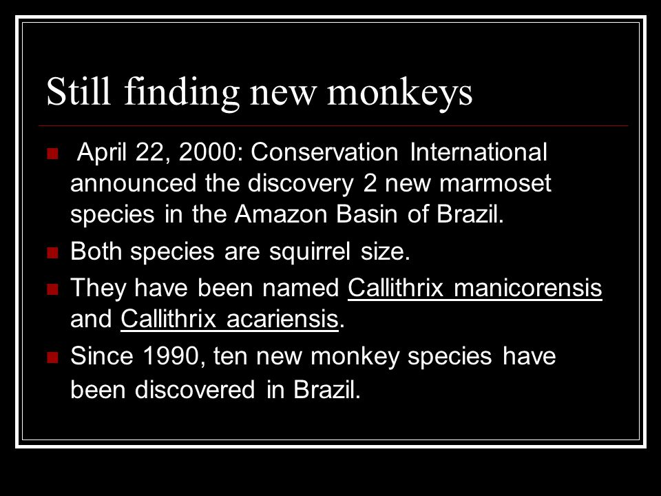 Still finding new monkeys