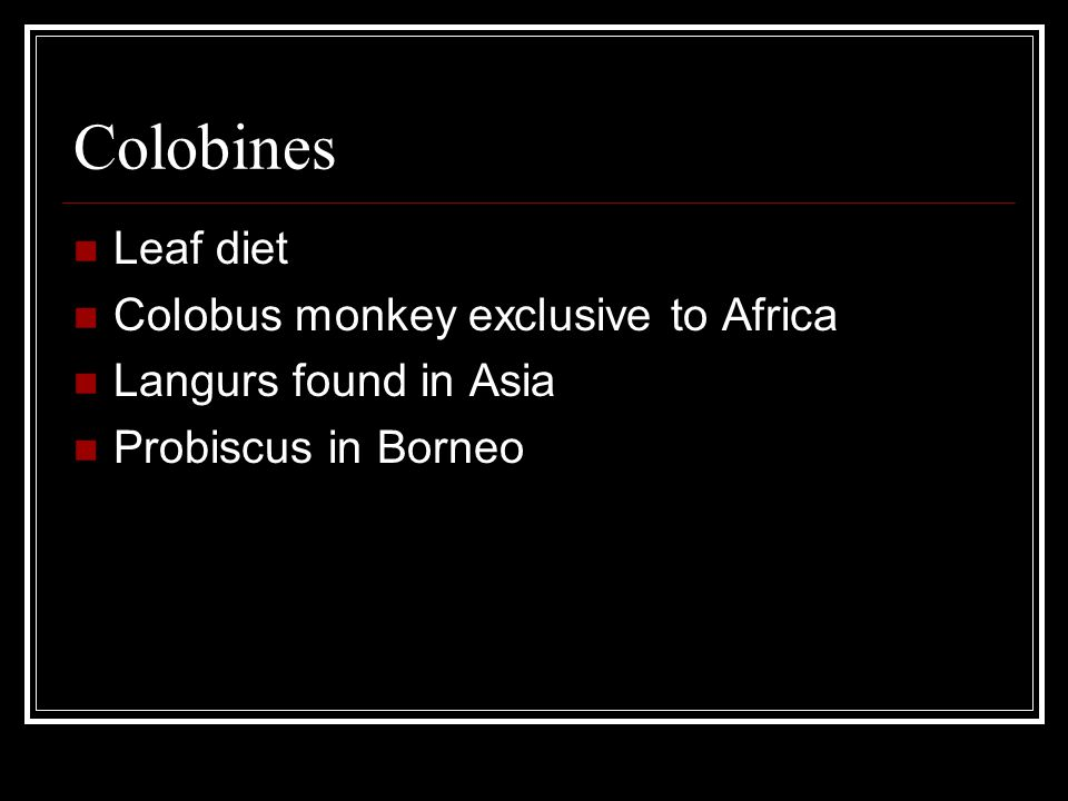 Colobines Leaf diet Colobus monkey exclusive to Africa
