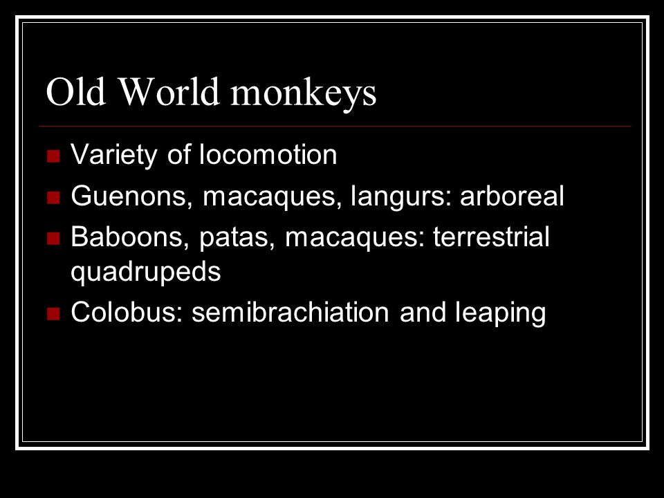 Old World monkeys Variety of locomotion