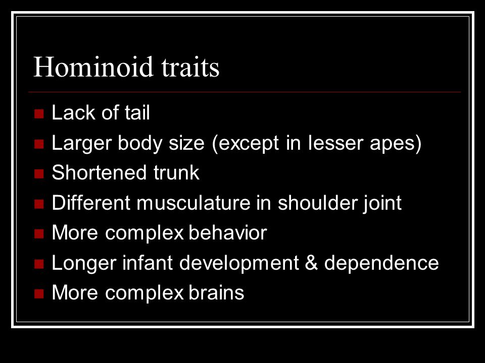 Hominoid traits Lack of tail Larger body size (except in lesser apes)