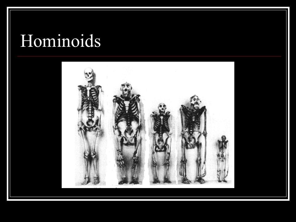 Hominoids