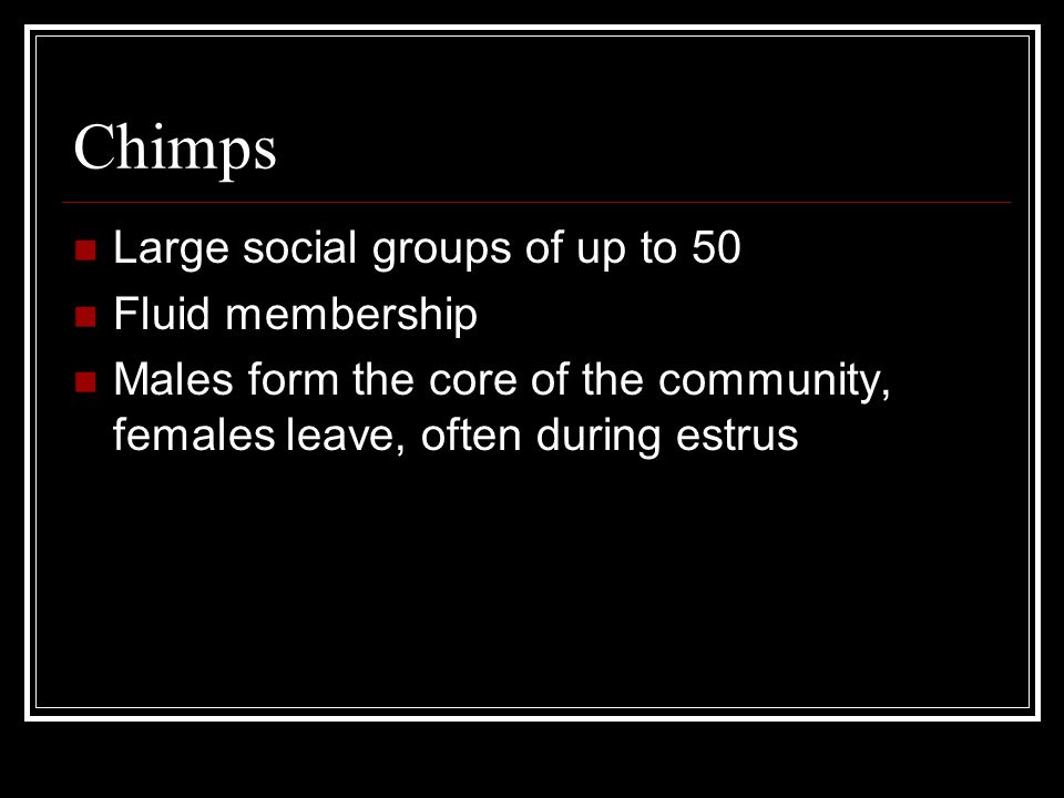 Chimps Large social groups of up to 50 Fluid membership
