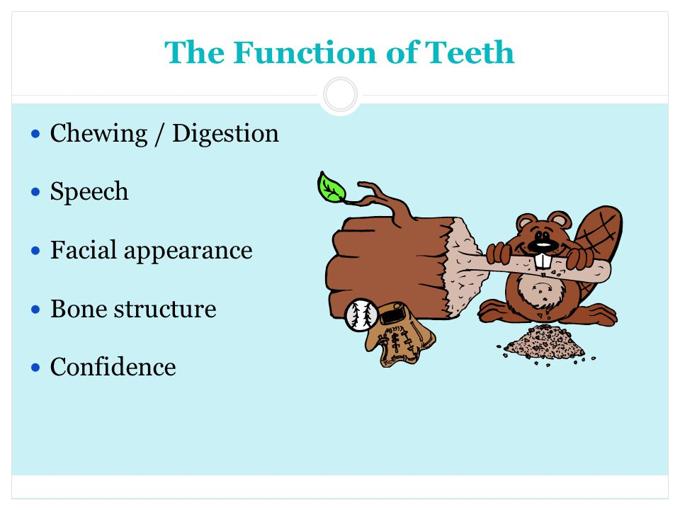 The Function of Teeth Chewing / Digestion Speech Facial appearance