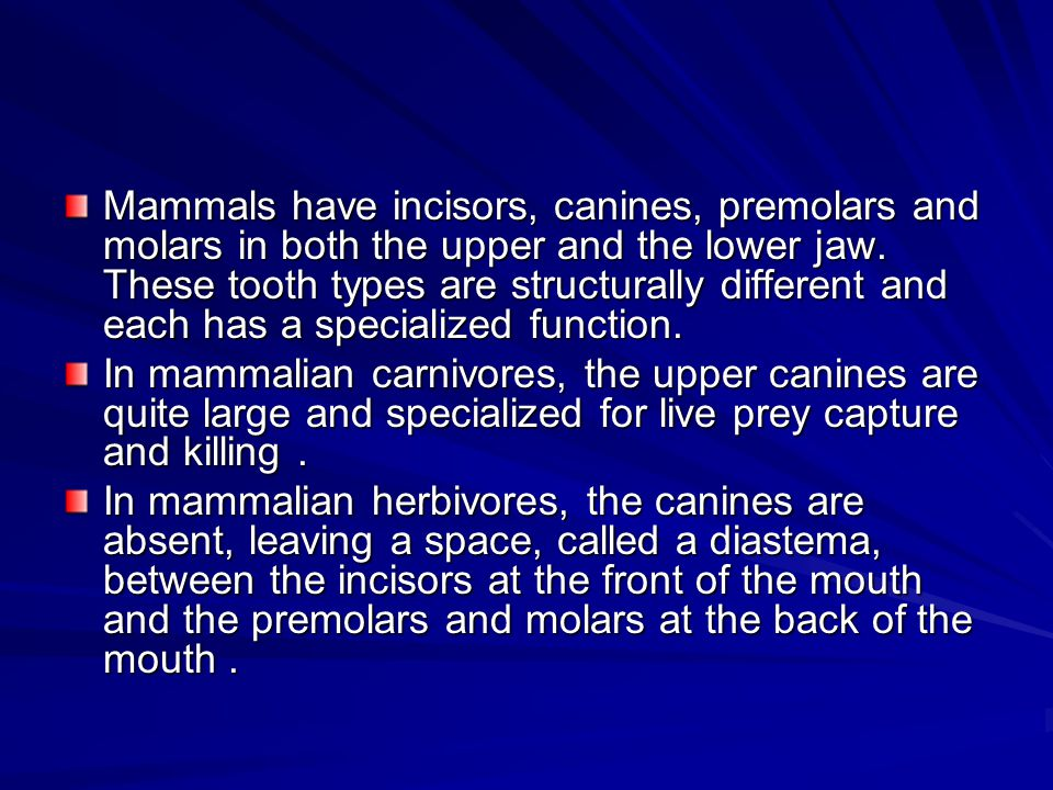 Mammals have incisors, canines, premolars and molars in both the upper and the lower jaw. These tooth types are structurally different and each has a specialized function.