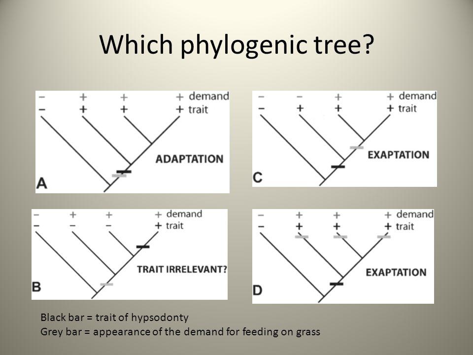Which phylogenic tree Black bar = trait of hypsodonty