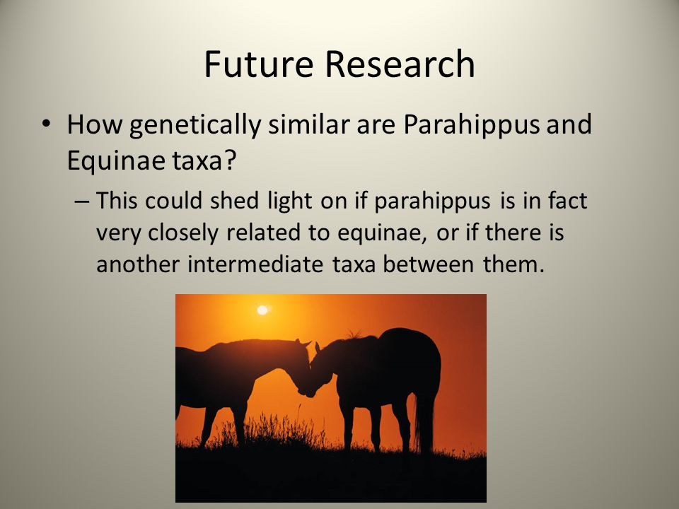 Future Research How genetically similar are Parahippus and Equinae taxa
