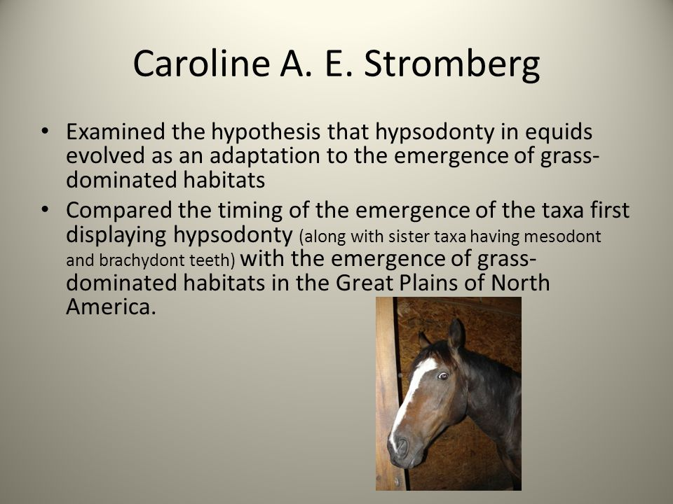Caroline A. E. Stromberg Examined the hypothesis that hypsodonty in equids evolved as an adaptation to the emergence of grass-dominated habitats.