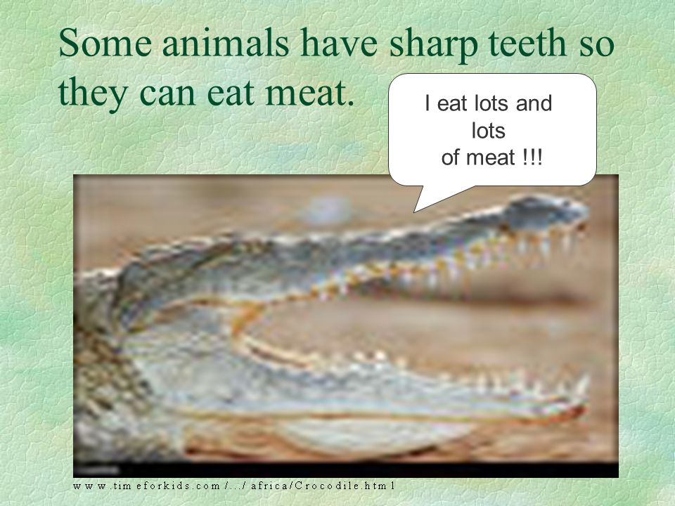 Some animals have sharp teeth so they can eat meat.