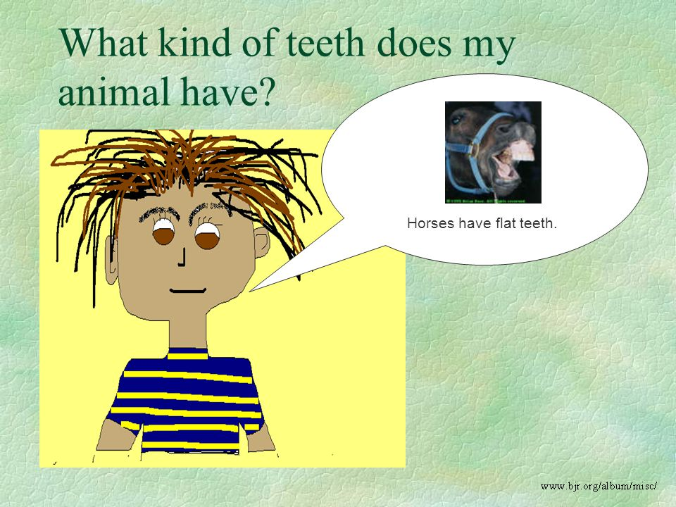 What kind of teeth does my animal have