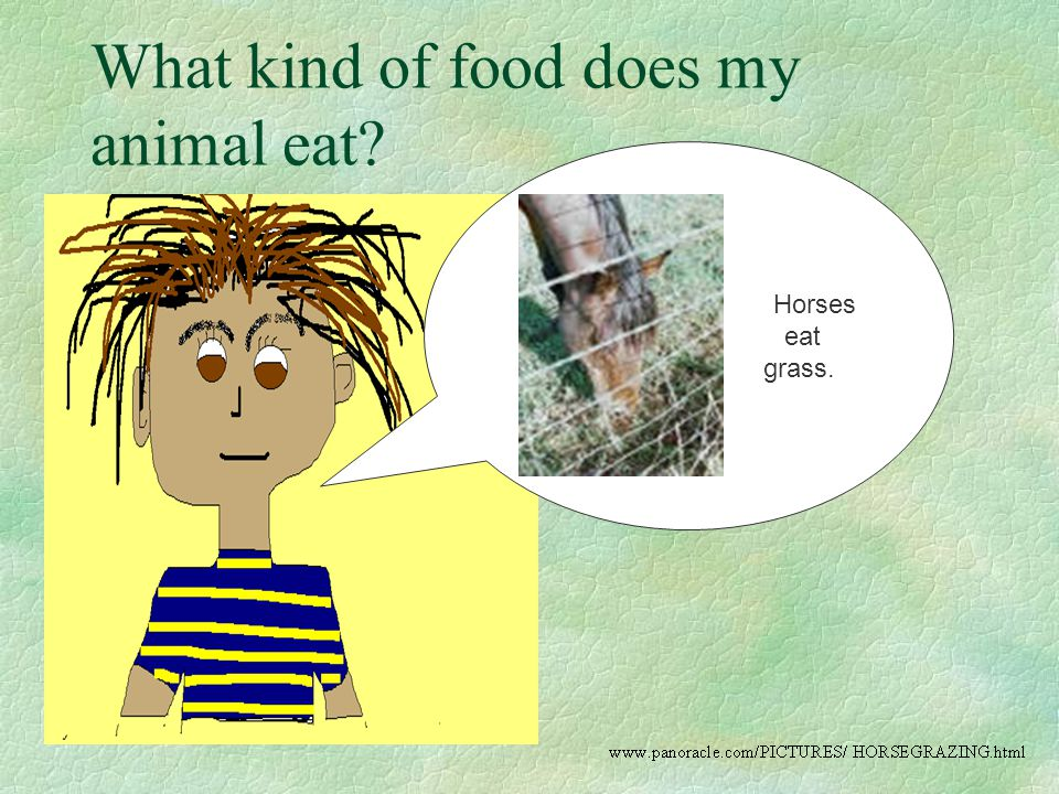 What kind of food does my animal eat