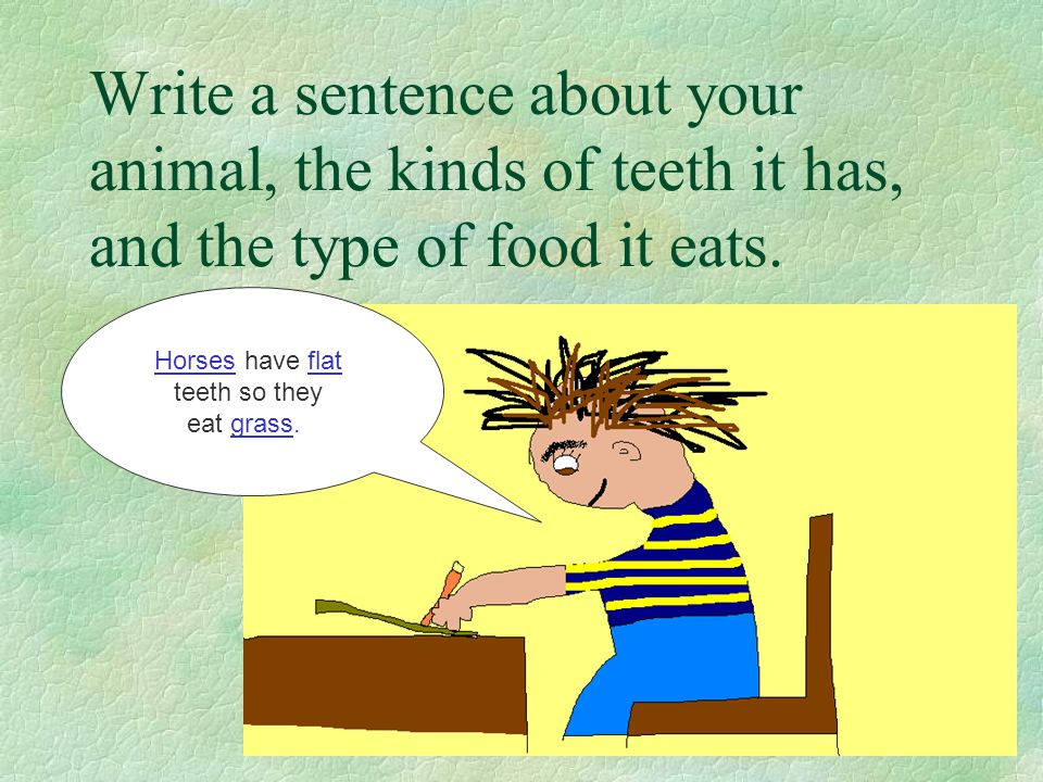 Write a sentence about your animal, the kinds of teeth it has, and the type of food it eats.