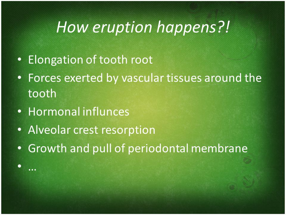 How eruption happens ! Elongation of tooth root