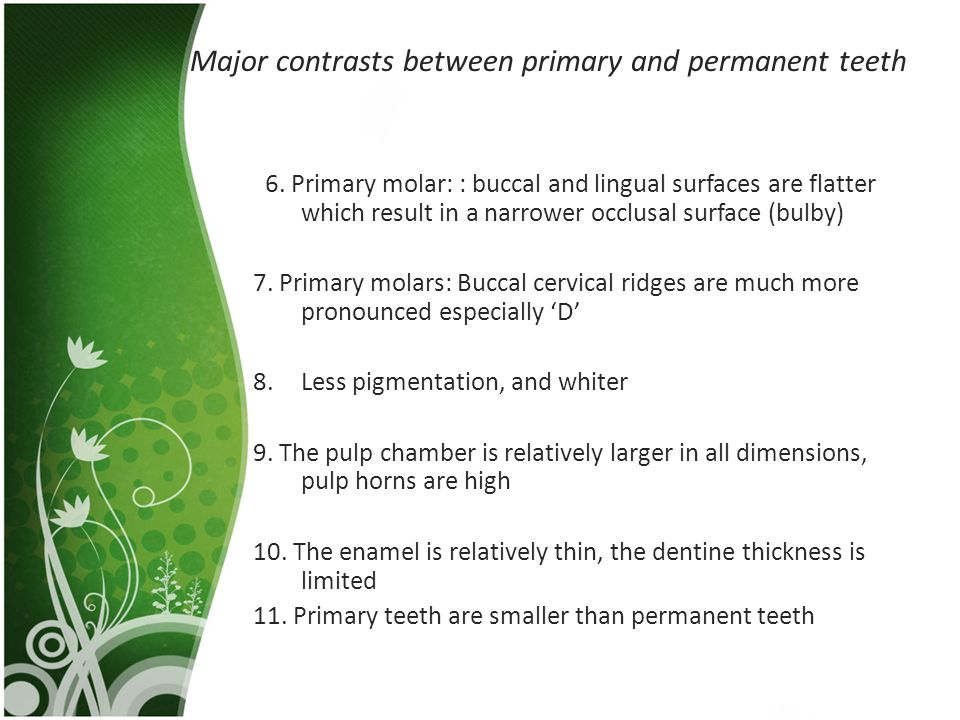 Major contrasts between primary and permanent teeth