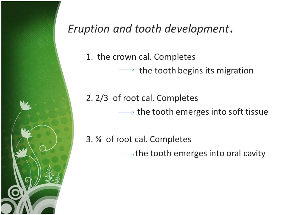 Eruption and tooth development.