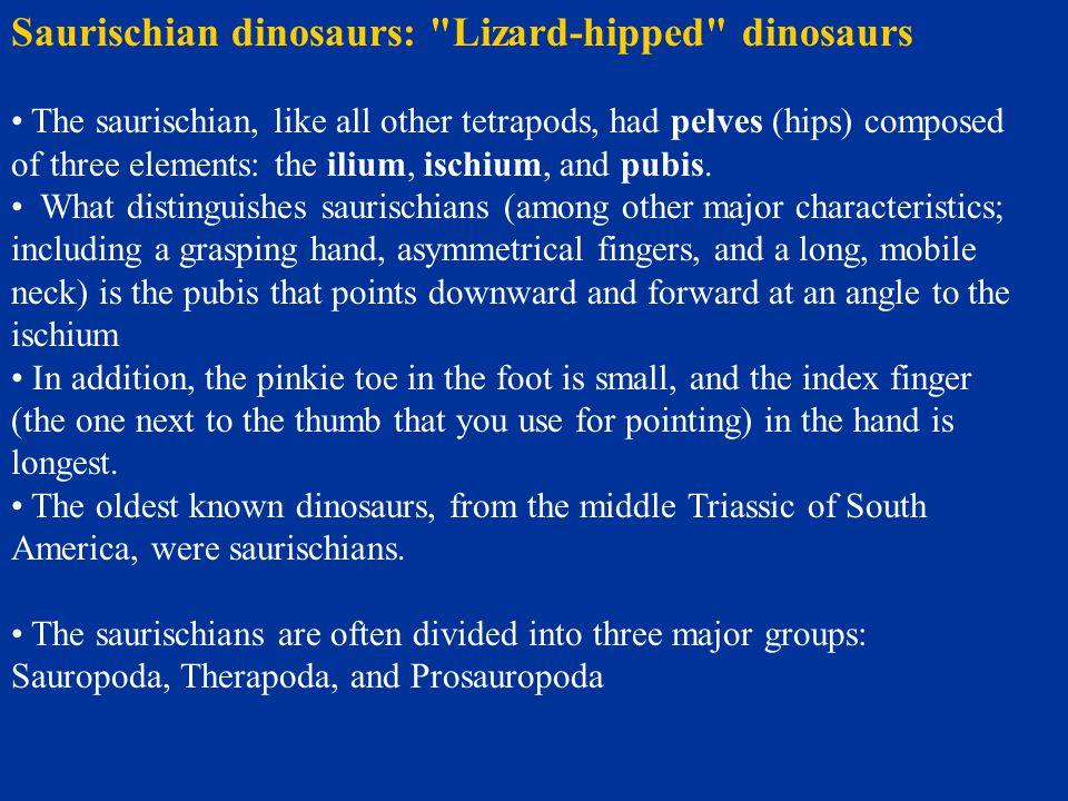 Saurischian dinosaurs: Lizard-hipped dinosaurs