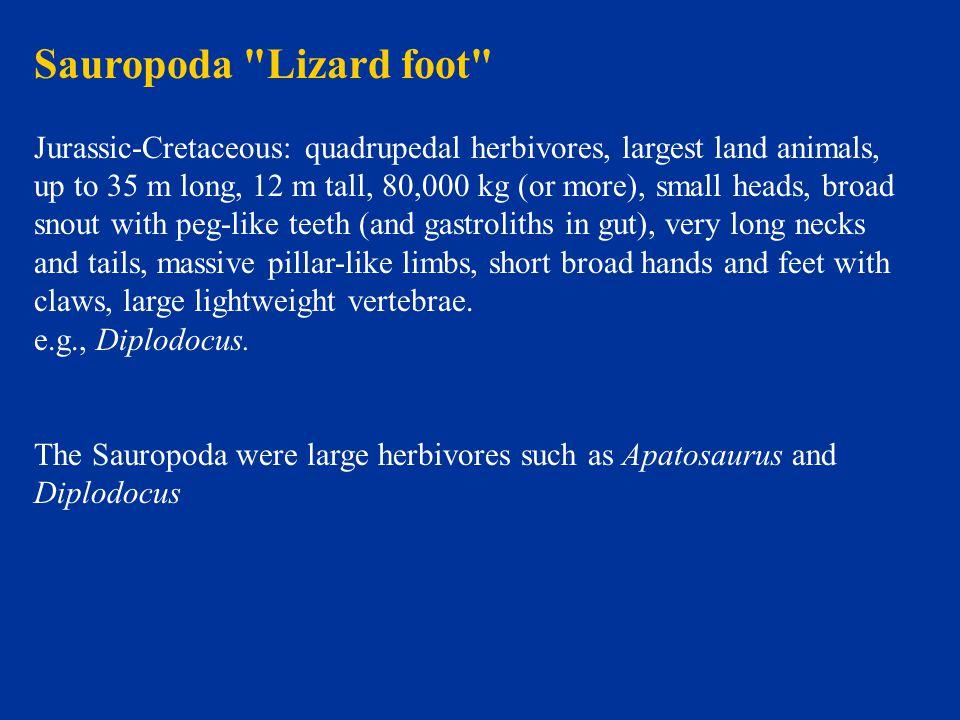 Sauropoda Lizard foot