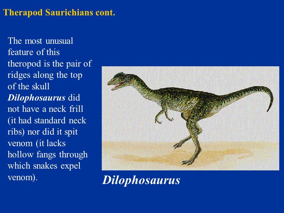 Therapod Saurichians cont.