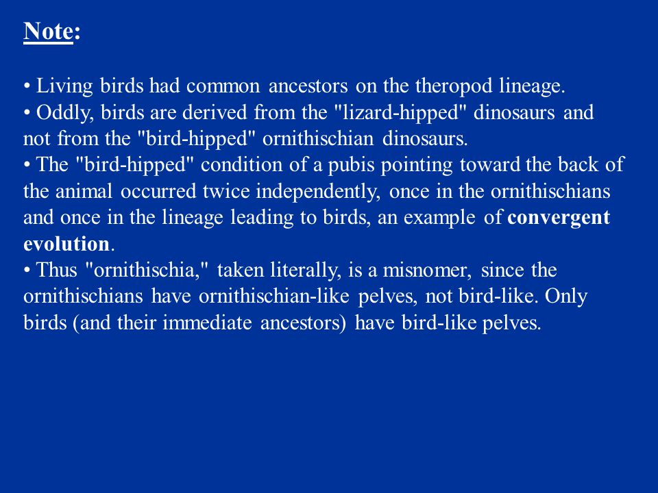 Note: Living birds had common ancestors on the theropod lineage.